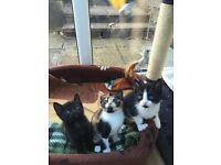 Beautiful kittens with start pack!