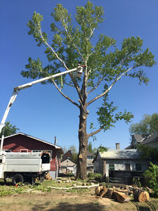 CUTTING TREE and bin for rent