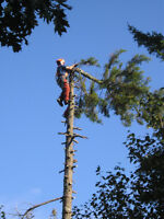 Tree Removal, Pruning Etc. Very experienced chainsaw operator