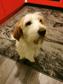 Lovely dog looking for new home