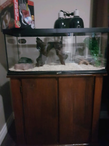 Snake tank with everything and stand
