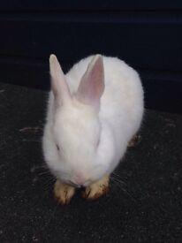 Lovely rabbits for sale