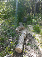 Tree Removal / Trimming In Lloydminster