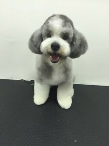 Looking for a Fabulous Groomer?