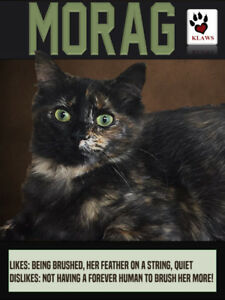 KLAWS KITTY ~ Morag Gorgeous Torti