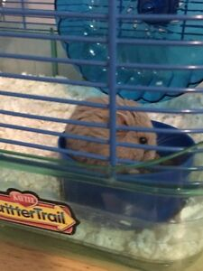 Russian Hamster & accessories BRAND NEW 2 weeks old