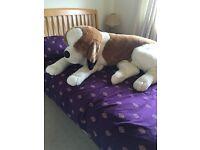 Massive soft toy dog