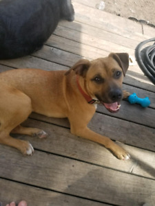 CRISS..A YOUNG FURKID IN NEED OF A GREAT HOME!