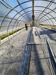 GREEN HOUSE: FOR SALE
