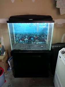 37 gallon aquarium