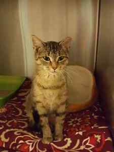 FREE Stray Cat in Urgent Need of Home-Spayed/Vaccinated/Healthy