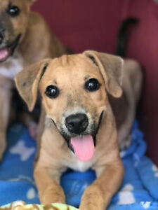 Rescue Puppy for Adoption! (Cookie)