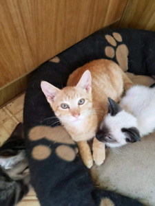 1 orange male looking for forever homes