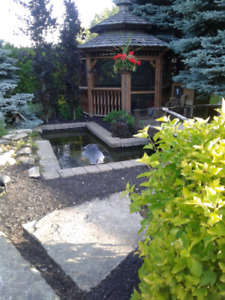 Koi or Gold Fish wanted for Pond