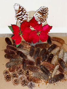 Poinsettia and Pinecones .. As shown .. Clean,SmokeFree Cambridge Kitchener Area image 2