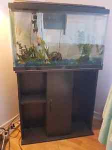 Everything you need to start your own aquarium!