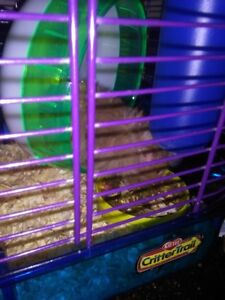 10  BROWN BABY HAMSTERS 7 WKS OLD M AND F $ 5.00  EACH
