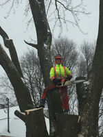 Tree Removal & Log Milling