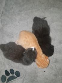 Beautiful Kittens 😸