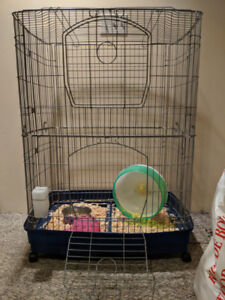 2 Female Rats (Bonded) with cage