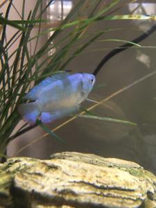 Wanted: Betta Fish + Fish Tanks
