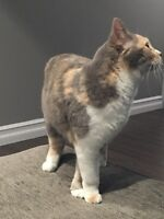 Cat free to loving home