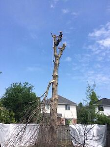 Tree Service  Peterborough Peterborough Area image 6