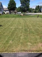 Lawn cutting and gardening.