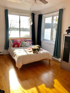 5 1/2 apartment looking for a new room mate
