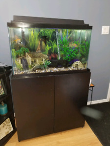 30 gal fish tank with Angel's and more
