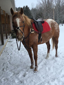 Actively looking for a part board or lease for my 2 mares Peterborough Peterborough Area image 7