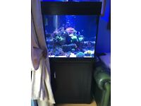 🐠 black Aqua one 275 Maine/tropical fish tank aquarium with setup (delivery/insulation)