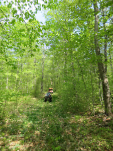 200 ACRES OF MATURE FOREST, HUNTING/TIMBER VALUE