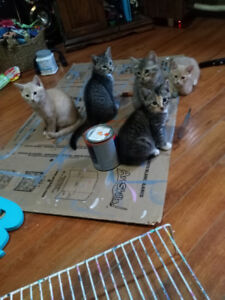 Adorable kittens in need of forever homes