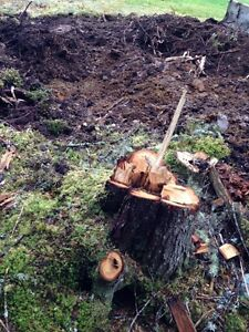 TREE STUMP Removal and more