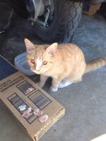 Kitten found on herder drive