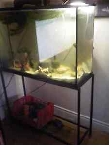2 Cichlids and Their Entire Aquarium, With Food and Accessories.