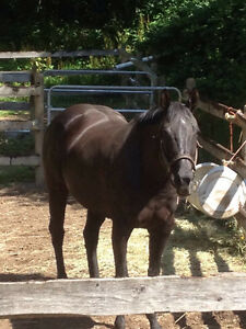 Gorgeous broodmare for sale