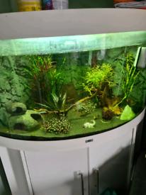 Juwel corner fishtank