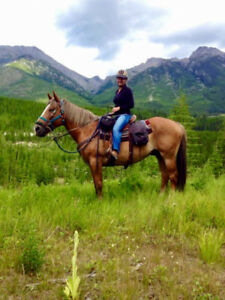 Awesome Trail Horse!