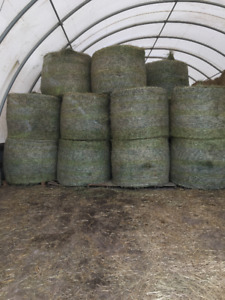 Large Round Hay Bales for Sale