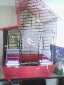 2 young budgies and cage