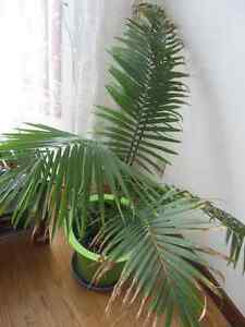 House Plants, starting from $10 Kitchener / Waterloo Kitchener Area image 4