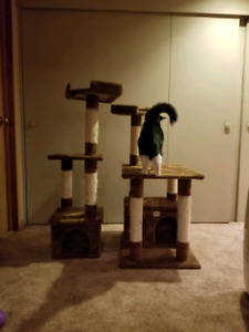 Cat homes scratching posts