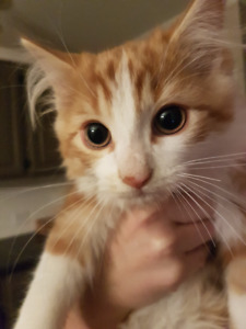 Free adorable kittens looking for a good home!