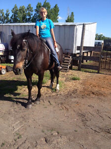 Percheron cross mare for sale