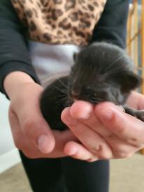 Fluffy kittens all.reserved