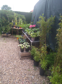 Plant sale, 10-4 Sat 19th, Sileby.
