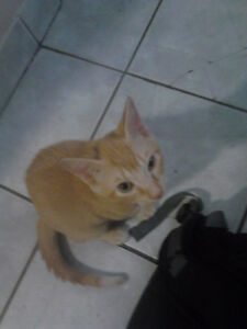 Selling kitten