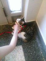 Lost Cat - Chat Perdu